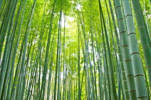 photo by pakutaso.com